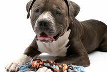 Dog breeds / by Sarah Collins