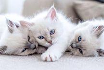 ☆ Cat ☆ / Katt