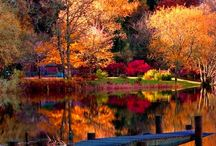 Autumn / by Tracey B