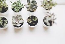 SUCCULENTS / Cacti - best trend ever! Since these little beauties seem to be the only plants I can keep alive, ha!