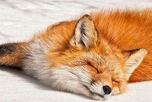 Animals - Animaux