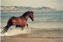 <3 Horse <3