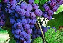 Gardening - Growing Your Own Fruit / by Florida Beaulieu