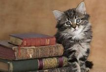 All you need are cats and books / Katten en boeken