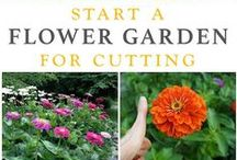 Green Thumb / Gardening time we crave.