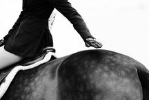 Hunters/Jumpers/Equitation / Hunters, Jumpers, Equitation