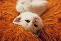 Animal - Cats