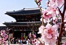 Spring Look Korea / All about Spring season in Korea / by Korea Tourism Organization