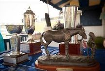 Trophies / Complete collection of #LaborDayWeekend Horse Show Trophies