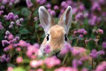Animal - Rabbits