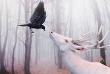 ANTLERS & FEATHERS / The hard and the soft of things / by PERYTON