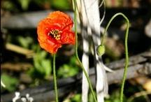 FLORES EN ALCALALÍ / Durante el mes de mayo, nos propusimos comenzar cada mañana con una flor en nuestras redes sociales. Son imágenes tomadas en Alcalalí por amigos y vecinos.  Aquí, una recopilación. Esperamos que os guste!