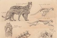 animal details