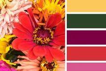 Цветовые сочетания.