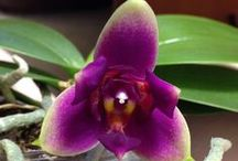 Orchids are wonderful