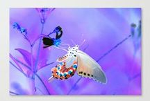 """A Butterfly Dream"" Product Design's by: Kim Pate / Inside this board you'll find most, if not all, of the designs I've created from my piece ""A Butterfly Dream"". I hope you enjoy them as much as I enjoyed creating them. Please look, repin if you want to, and-or buy what you like. Have a good one.. :) / by Kim Pate"