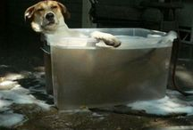 It's a Dog's Life! / Owning a dog will add laughter and love to your life.