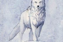 Wolves and dogs <3