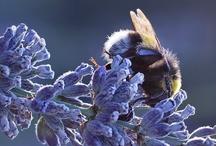 Bee is beautiful / Bees, bugs, butterflies…