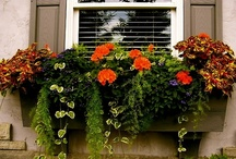 Southivew Design's Master Gardener / Southview's master gardener Jeanne Oelmann and her fine gardening team can create beautiful pots, flower beds and window boxes that will make your yard and home POP with color.