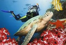 Best dives for spectacular marine life / Passionate scuba diver, journalist, author and dive expert Tim Ecott presents his top five scuba dives for seeing exceptional marine life. www.secretearth.com/best_lists/33-best-dives-for-spectacular-marine-life