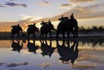 Okavango / The world's largest inland delta, teeming with game, offering outstanding land and water based safaris. http://www.secretearth.com/destinations/228-okavango-delta