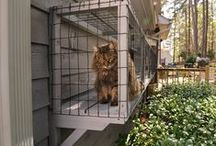 "Catio Ideas / Do you love your cat but also love birds?  Torn between wanting to allow your cat outside but also wanting to feed the birds?  Consider having the best of both worlds.  Build your Cats a Catio--Cat Patio!  They can watch and play in the ""outdoors"" but allow your bird feeders to be free from visits from your beloved feline.   / by YardMap"