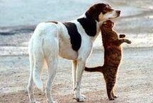 Сats and dogs / котики и тобики