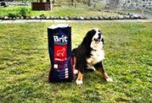 Chovatelské potřeby pro psy / Chovatelské potřeby pro psy, kvalitní krmiva a nekonečný výběr hraček či doplňků.