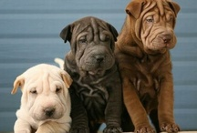 Cute Puppies / Cute Puppies says it all. Post photos of cute dogs and puppies. Invite your friends. NO advertising!