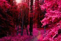 Nature / by Doreen Murphy