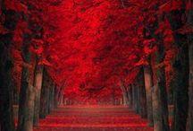 Autumn, My Favorite. / by Doreen Murphy