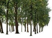 Trees_Arboles