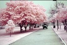 everything pink