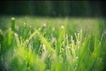 Lawn, Garden, & Landscaping