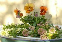 Fiori e piante / by raffaella maini