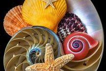 Shells, rocks and stars