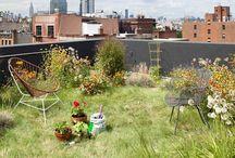 Besoin de verdure/Need greenery / extérieur