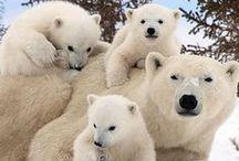 Cute animals :-)