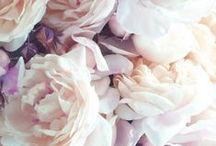 Decor Inspirations / Flower, Blumen, Gesicher, Faces, People, Landscape