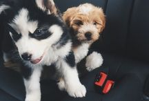 Furry cuteness