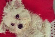 Casper my dog