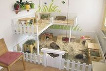 Guinea Pigs: Cages / The best piggies houses i like