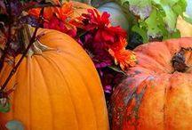 Fall / by Alicia Kelly