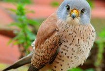 Birds! / bıdıklar alemii