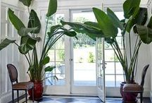 Style File: Indoor Plants / I love indoor plants as much as I love flowers and vases scattered throughout the house. Having a luscious green plant inside your home is like having life breathed right into your home.
