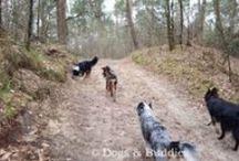 Raus ins Grüne - Wald und Wiese / Spaziergänge in und um Oldenburg - Spaziergang mit Hund - Wald - Wiese - Parks - Grünflächen - Deich - Moor - Stadt Oldenburg - Oldenburger Hunde - dogsundbuddies.com