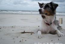 Mei / Australian Shepherd - Dogs&Buddies - dogsundbuddies.com