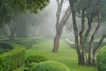 Gardens, Trees, and Wildlife / Mother Nature