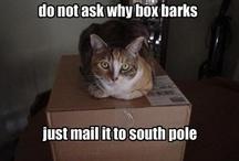 Silly - Cats / I often wonder if my cat thinks like this..ha,ha!! / by Jenn